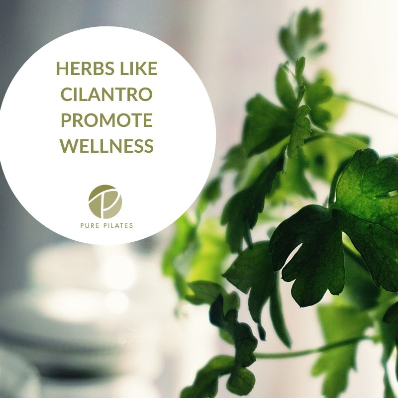 Herbs and Spices Promote Wellness